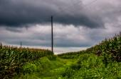Storm clouds over corn fields and utility poles in rural York Co — Stockfoto