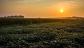 Sunrise over farm fields in rural York County, Pennsylvania.  — Stock Photo