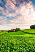 Sunset clouds over a farm in Southern York County, Pennsylvania. — Stock Photo