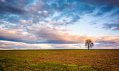 Sunset over a lone tree in a farm field in rural York County, Pe — Stock Photo