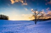закат над деревом и заснеженным полем в сельской округе йорк, — Стоковое фото