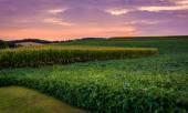 Sunset sky over farm field in rural York County, Pennsylvania.  — Stock Photo