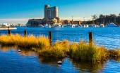 Swamp grasses in the Inner Harbor of Baltimore, Maryland.  — Stock Photo