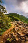 The Appalachian Trail on Little Stony Man Cliffs in Shenandoah N — Stock Photo