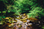 The Oconaluftee River, at Great Smoky Mountains National Park, N — Stock Photo