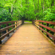 Walking bridge over the Oconaluftee River, at Great Smoky Mounta — Stock Photo #52616717
