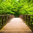 Walking bridge over a stream, at Great Smoky Mountains National  — Stock Photo #52616737