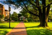 Tree and brick walkway at John Hopkins University in Baltimore,  — Stock Photo