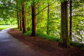 Bomen langs een pad in Piemonte park in atlanta, georgia. — Stockfoto