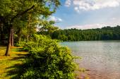 Trees and bushes along the shore of Lake Williams, in York, Penn — Stock Photo