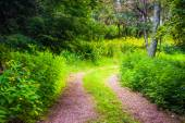 Trees and flowers along a trail at Shenandoah National Park, Vir — Stock Photo