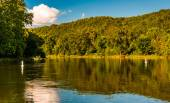 Trees reflecting in the Shenandoah River, seen from the Low Wate — Stock Photo