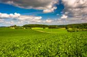 View of farm fields and rolling hills in rural Baltimore County, — Stock Photo