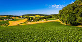 View of rolling hills and farm fields in rural York County, Penn — Stock Photo