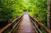 Walking bridge on the Limberlost Trail in Shenandoah National Pa — Stock Photo
