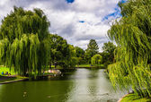 Weeping willow trees and a pond in the Boston Public Garden.  — Stock Photo