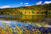 Lily pods and a pond in Acadia National Park, Maine.  — Zdjęcie stockowe