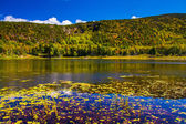 Lily pods and a pond in Acadia National Park, Maine.  — Stock Photo