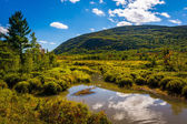 Marsh and mountain in Acadia National Park, Maine.  — Stock Photo