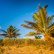 Palm trees and fence at Coral Cove Park, Jupiter Island, Florida — Stock Photo #58124801