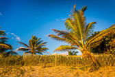 Palm trees and fence at Coral Cove Park, Jupiter Island, Florida — 图库照片