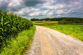 Corn fields along a dirt road in rural Carroll County, Maryland. — Stock Photo