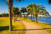 Palm trees along a path in Daytona Beach, Florida. — Stock fotografie