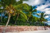 Palm trees at Higgs Beach, Key West, Florida. — Stock Photo