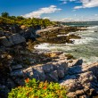Rocky coast seen at Fort Williams Park, in Cape Elizabeth, Maine — Stock Photo #58459645