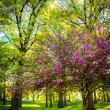 Colorful trees in Druid Hill Park, Baltimore, Maryland. — Stock Photo #58469725