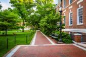 Brick walkway and building at John Hopkins University, Baltimore — Stock Photo