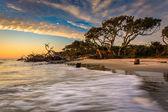 Sabah ışık ve dalgalar dalgaların karaya attığı odun plajda, Atlantik Ocea — Stok fotoğraf