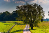 Tree along a dirt road in rural Howard County, Maryland. — Stock Photo