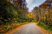 Autumn color along a dirt road near the Blue Ridge Parkway in Mo — Stock Photo