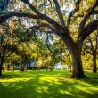 Large oak trees and spanish moss in Forsyth Park, Savannah, Geor — Stock Photo #60450335