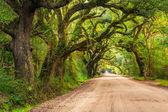 Oak trees along the dirt road to Botany Bay Plantation on Edisto — Stock Photo