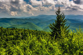 Pine tree and view of Appalachian Mountains from the Blue Ridge  — Stock Photo