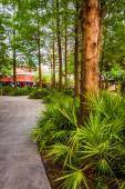 Trees along a path in Orlando, Florida. — Stockfoto