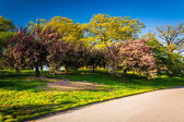 Colorful trees along a path at Druid Hill Park, Baltimore, Maryl — Stock Photo