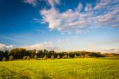 Evening light on a field in rural York County, Pennsylvania. — Fotografia Stock