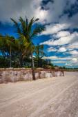 Palm tree at Higgs Beach, Key West, Florida. — Stock Photo