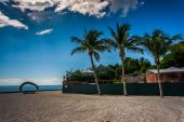 Palm trees at Higgs Beach, in Key West, Florida. — Stock Photo