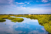 Reflections in a marsh in St. Augustine, Florida. — Stock Photo