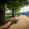 Trees and benches along a path at Federal Hill Park, Baltimore, — Stock Photo #61308621