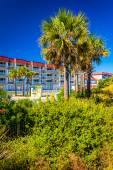 Palm trees and a hotel at Tybee Island, Georgia. — Stock Photo