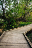 Boardwalk trail through the forest at Wildwood Park in Harrisbur — Stock Photo