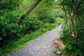 Trail through the forest at Wildwood Park, Harrisburg, Pennsylva — Stock Photo