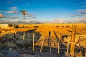 Evening light on a farm near Albuquerque, New Mexico. — Stock Photo