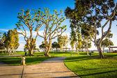Trees and walkways at the Embarcadero Marina Park North in San D — Stock Photo