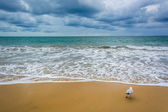 Dark clouds over the Pacific Ocean and a seagull in Corona del M — Stock Photo